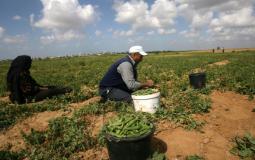 مزارع داخل أرضه في قطاع غزة