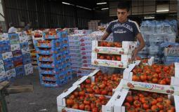 تصدير الخضار من غزة - توضيحية -