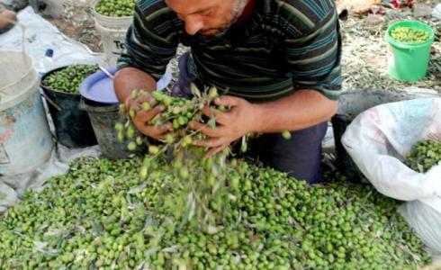 الزراعة في فلسطين