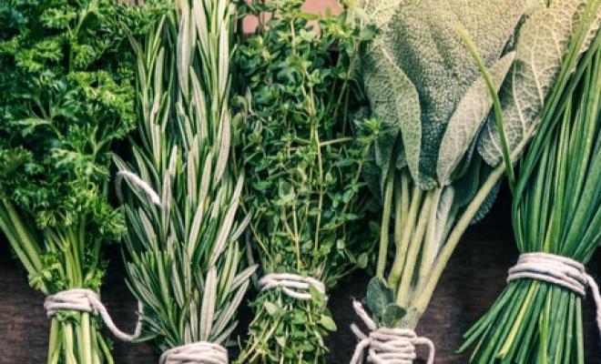 إليك طرق علاج الكلى بالأعشاب الطبيعية وكالة سوا الإخبارية