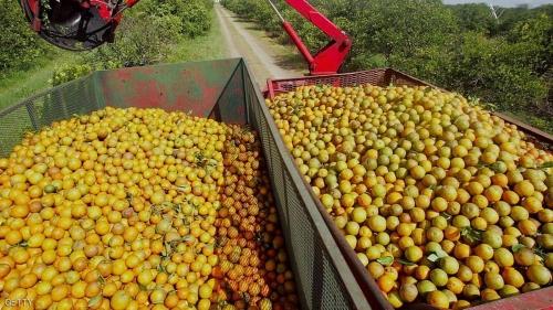 تغطي حقول البرتقال 27 ألف هكتار من مساحة تونس